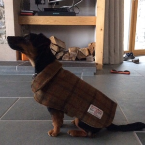 Dog now the proud owner of Tweed jacket